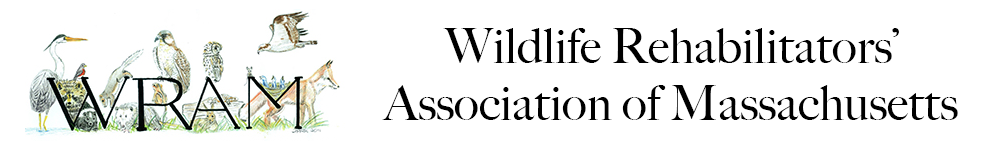 Wildlife Rehabilitators' Association of Massachusetts (WRAM)
